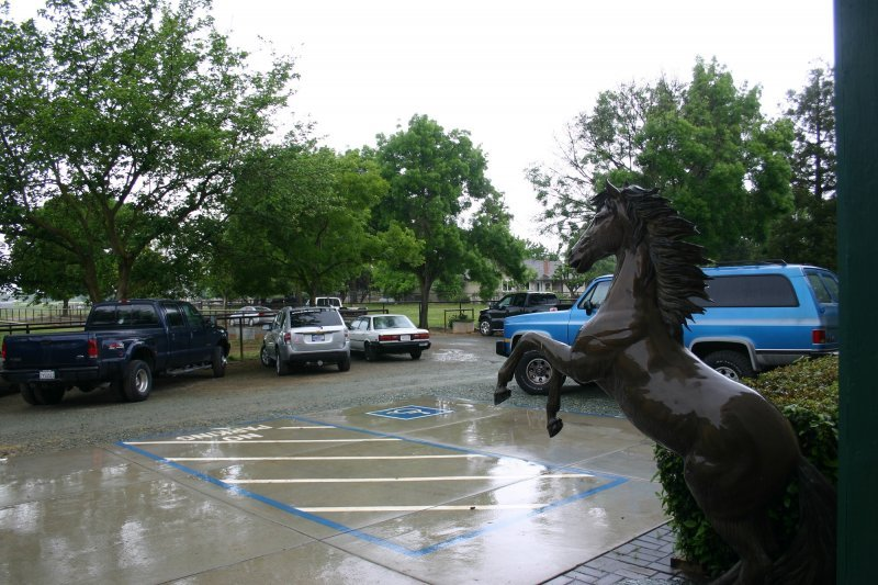 Rainy Day at Hunter Stallion Station