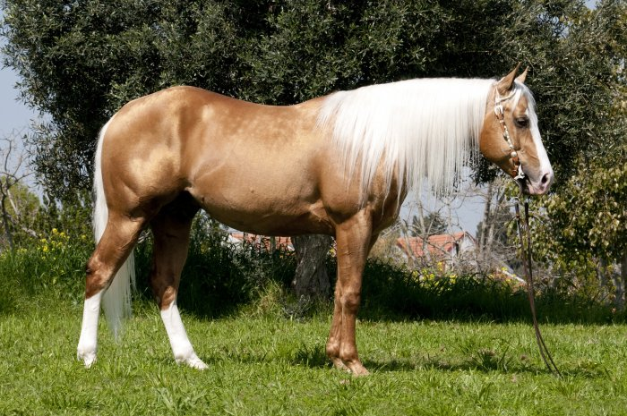 Our Stallions Feature