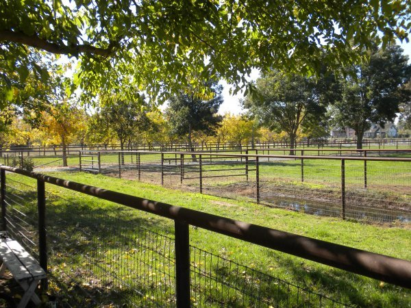 hunter_stallion_station_front_pasture