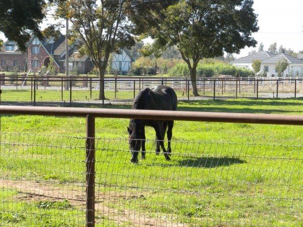 hunter_stallion_station_pasture_with_horse