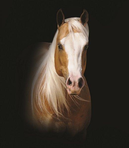 infinity-little-step-aqha-stallion-2008