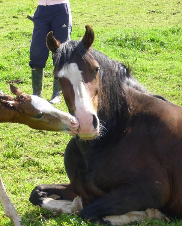 Mare Foal 2