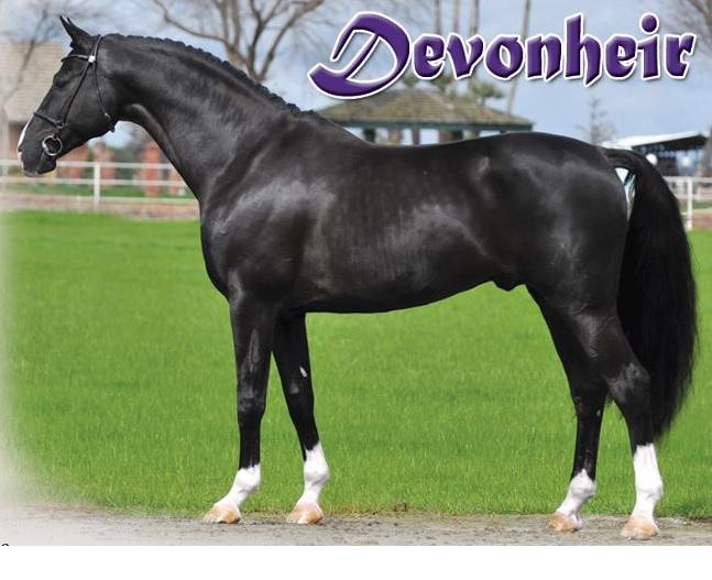Devon Heir Hunter Stallion Station