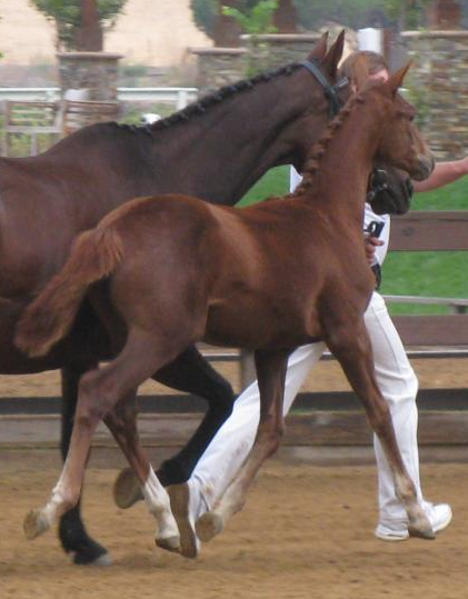 Offspring - Thoroughbred Mares