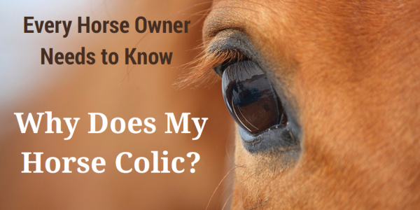Why Does My Horse Colic?
