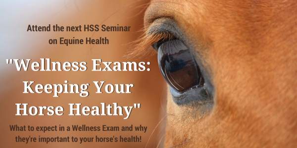 Equine Wellness Exams