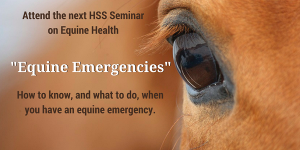 Be Prepared for Equine Emergencies
