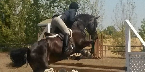 The Importance of Equine Performance Exams
