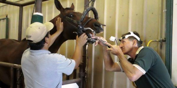 Equine Dental Special Offer